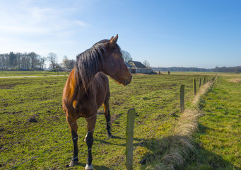 Horse standing in a sunlit meadow in winter