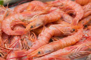 Fresh red shrimps