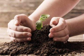 seedling in children's hands on wooden background