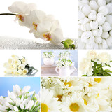 Collage of different white flowers