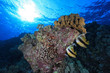 Coral reef and bannerfish in the red sea