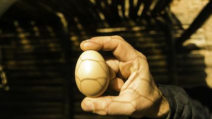 Huevo ecológico