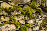Dry masonry stonewall with moss closeup as background