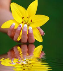 Schöne gelbe Lilie in einer Hand