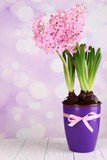 Pink hyacinth in pot on table on bright background