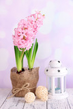 Pink hyacinth in pot with decorative lantern