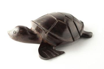 sea turtle perfíl