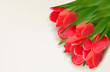 Flower background with red tulips and sample text. Vector illust