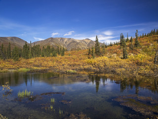 Beautiful pond in the Yukon with mountains in the background