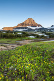 Glacier National Park - Reynolds Mountain over wildflower field