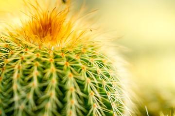 Cactus Thorn Close up