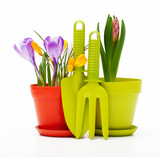 Flowers in pot and garden tools isolated on white.