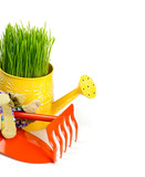 watering can with green grass and gardening tools