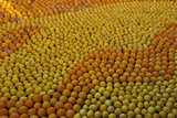 Citrus Exhibition at the Lemon Festival of Menton