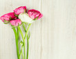 pink and red ranunculus on wooden table and copy-space for your
