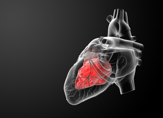 3d render Heart atrium - side view