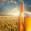 Glass of beer and bottle against wheat field and sunset