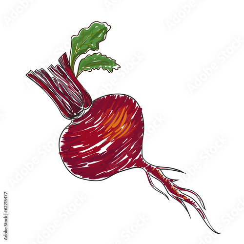 Watercolor beet isolated in vector