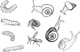 set of larva and snail sketches on white