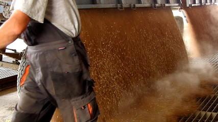 Farmer unloading wheat grain in a silo, slow motion