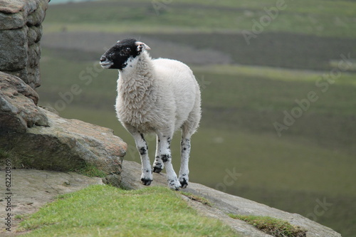 A Black Faced Sheep Standing on a Rocky Outcrop.