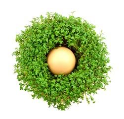 rzeżucha z jajkiem