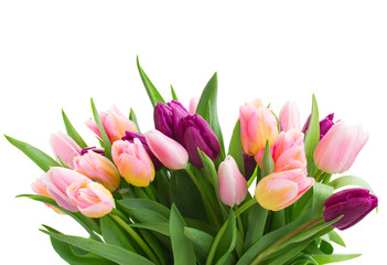 bunch of pink and violet tulips