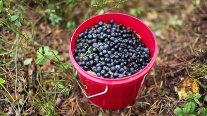 Full bucket of blueberries