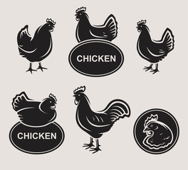 Chicken set. Vector