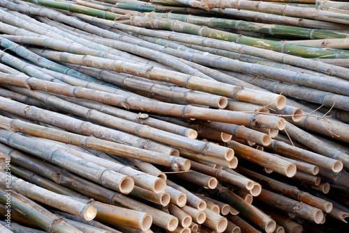 In de dag Bamboo Bamboo sticks raw material for constructions of Asian