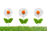 Three artificial daisies on white background.