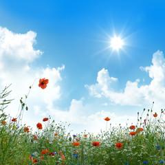 Blumenwiese unter blauem Himmel