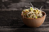 French Lentils Sprouts in a Wooden bowl
