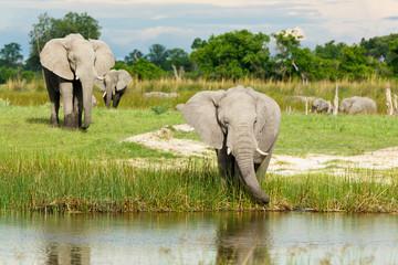 Elefanten am Fluß