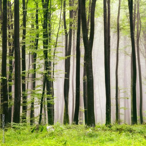 Plakat Spring forest