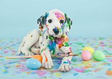 Wielkanoc dalmatain szczeniaka