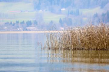 Dry vegetation on the lake