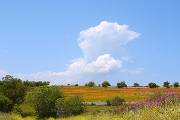 Campo di papaveri con nuvola e alberi