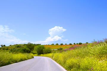 Panorama con strada fiori gialli e papaveri