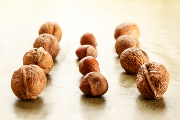 walnuts and hazelnuts in rows