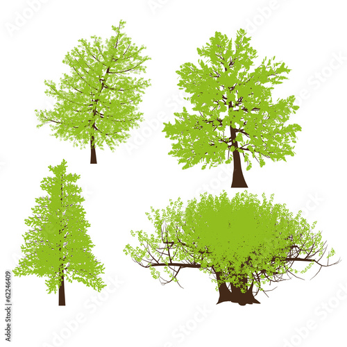 drawing of the tree vector llustration