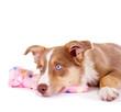Kranker Hund mit Wärmeflasche
