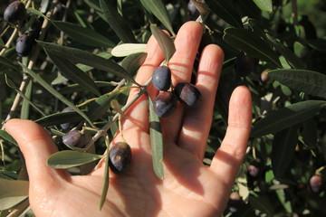 mano con olive