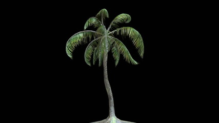 Palm tree in the wind, Alpha Matte