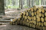 Stacked logs in forest