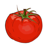Red tomato in vector