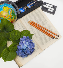 Flower hydrangea and school subjects.