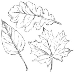 Vector Set of Sketch Leaves