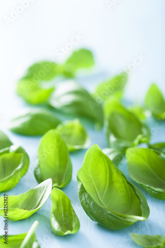 basil leaves over blue background