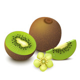 Kiwi fruit isolated on white background. Vector illustration